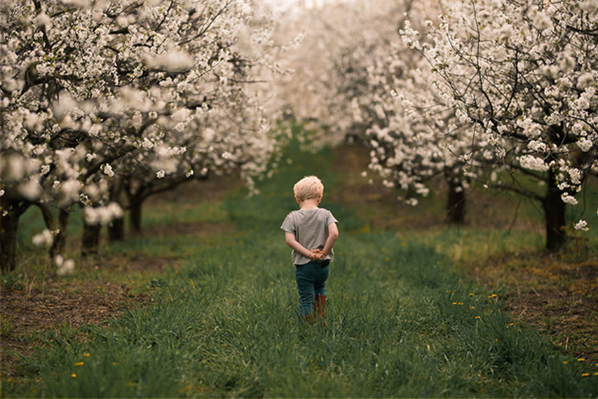 A child is walking through a meadow next to fruit trees.