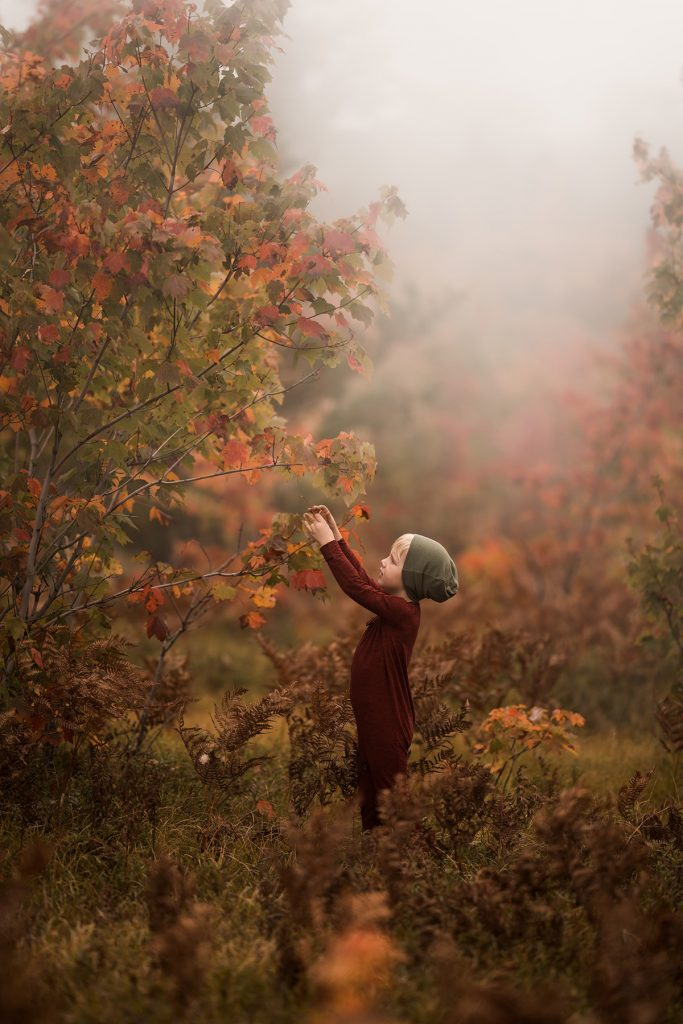 A little boy is picking leaves from a tree in an autumnal surrounding.